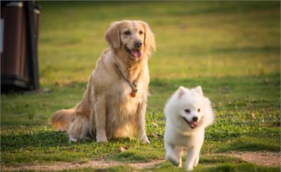 国家明确家养畜禽范围不包含狗