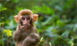 离奇!印度猴子抢走新冠病毒检测样本,或将导致病毒在社区内进一步传播