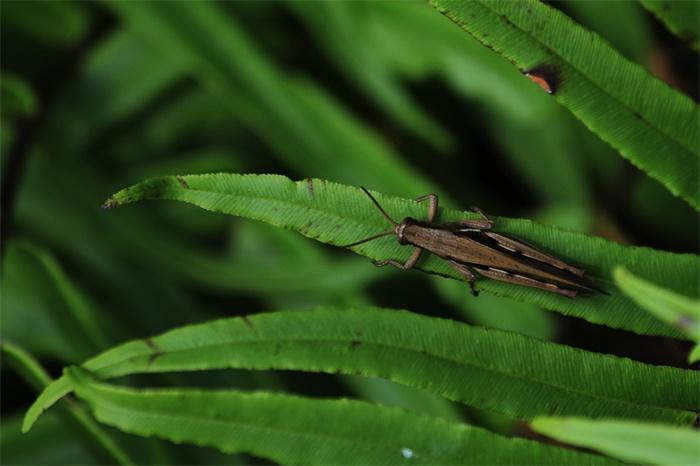 """铺天盖地!印度首都多地出现大量蝗虫群 居民敲锣打鼓放鞭炮""""硬核驱蝗"""""""