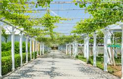 锡山台创园升级为国家现代农业产业园