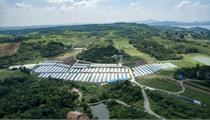 肇庆市2020年市级现代农业产业园申报政策