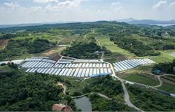 2020年肇庆市现代农业产业园申报政策