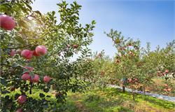 河源两园区上榜首批省级现代农业产业园建设名单