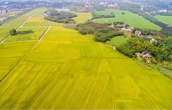 增城2家现代农业产业园上榜省级名单