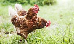 全国将逐步取消活禽市场交易,鼓励推广活禽集中宰杀
