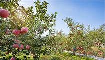 2020年江苏省现代农业产业示范园建设申报要求