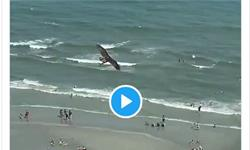 美國海邊奇觀!巨大老鷹從海中抓起一頭鯊魚 網友:《鯊卷風》成現實了