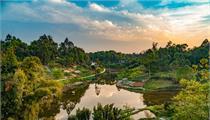 2020年重点支持的4种林业示范项目 补助资金200万以上