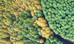 2020年才過去一半,亞馬遜熱帶雨林遭破壞的面積是巴黎的10倍!