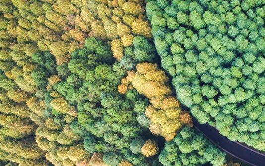 2020年才过去一半,亚马逊热带雨林遭破坏的面积是巴黎的10倍!