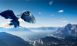 躬身入局后,就成為老鷹和蚯蚓啦