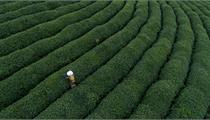 广东省启动国家第一批绿色产业示范基地申报工作