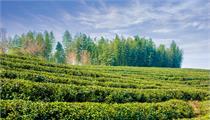 国家开启绿色产业示范基地建设申报工作