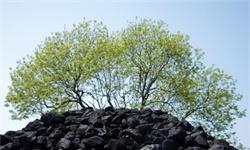 2020年中国煤炭行业发展现状分析 上半年原煤产量超18亿吨