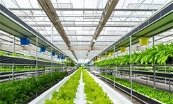 2020年中国<em>生物农药</em>行业市场现状及发展前景分析 未来市场替代空间巨大