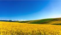 2020年现代农业产业园发展规划的新思路