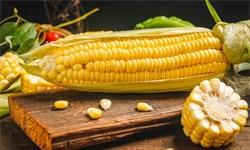 2020年中国玉米行业发展现状分析 <em>期货</em>价格突破2000元/吨大关