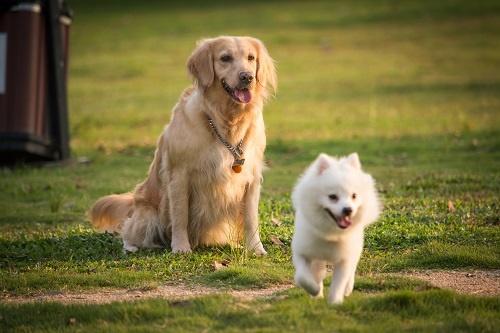 感染时不满7岁!美国首例感染新冠病毒的狗死亡 生前可能患有淋巴瘤
