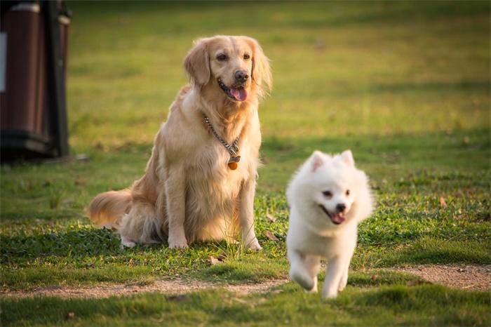 全球第二例!美国首例感染新冠病毒的宠物狗死亡:死前被检测出患癌,但死因存疑
