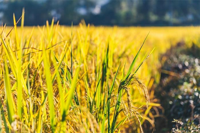 世界濒临至少50年来最严重粮食危机,全球近7亿人处于饥饿状态