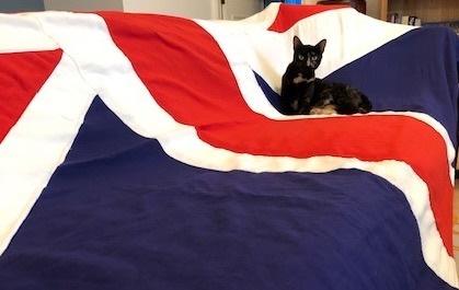 更爱乡下生活!英国外交部首席捕鼠猫将退休 在推特上有10万粉丝
