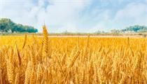 加快发展乡村产业 从农产品加工业开始!
