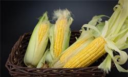 2020年中国玉米行业市场现状及发展前景分析 全年市场消费量将增长至2.9亿吨左右