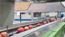 灌南县2020年省级现代农业产业发展(优势特色主导产业)项目立项评审情况公示