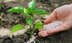 2020年中国农资流通行业市场现状及发展趋势分析 产品销售与农技服务一体化发展