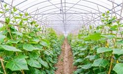 2020年中国<em>蔬菜</em><em>种植</em>行业市场现状及竞争格局分析 山东省产量稳居全国首位