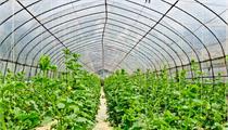 广州增城区出台现代农业产业园建设实施方案