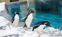 重大发现!现代企鹅原来都来自地球远古的失落第八大洲!