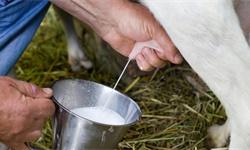 2020年中国<em>羊奶</em>行业市场分析:市场规模已超120亿元 绵羊奶产量遥遥领先发展