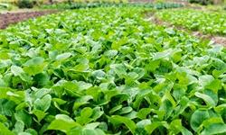 2020年中国蔬菜种植行业进出口现状分析 蔬菜进出口市场同步发展