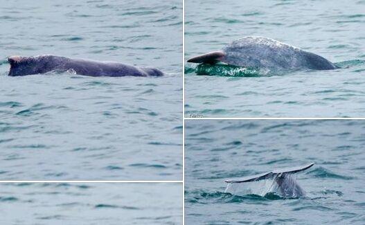 新加坡南部海域发现粉红色海豚