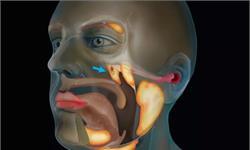 意外之喜!科學家在人體內發現未知新器官 或有助于減少癌癥患者副作用