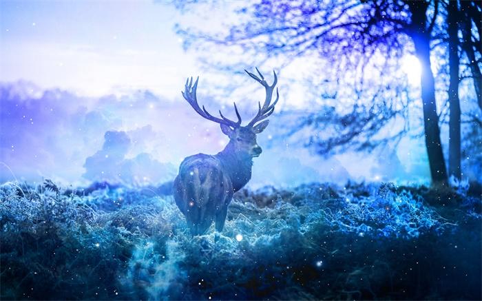 珍稀动物!我国麋鹿种群数量已达8000只 30多年来规模迅速壮大