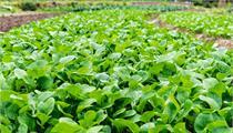 蔬菜主题 | 农业观光园规划设计的功能定位