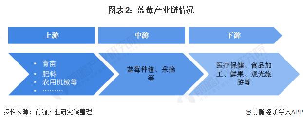 图表2:蓝莓产业链情况