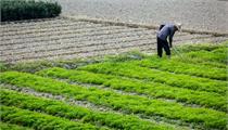蚌埠市:打造全省农业产业化先行军建设长三角绿色农产品生产加工供应基地实施方案