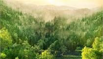 """湖北襄阳开展""""千村万树""""行动推进森林乡村创建"""