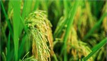 杭州:2020年度市示范性农民专业合作社、家庭农场评定公示