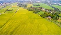 2020年四川南江县级现代农业园区认定名单