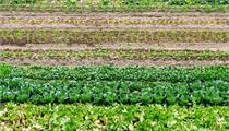 杭州市农产品质量安全与农业农村扶持政策挂钩实施细则(试行)
