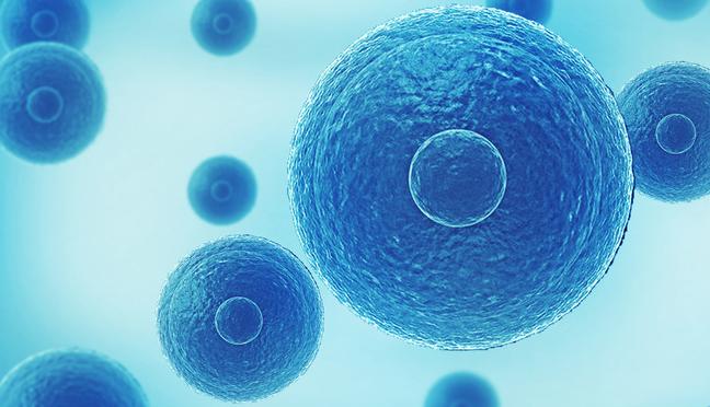 《科学报告》:调节性T细胞功能发生变化,反向导致骨质流失