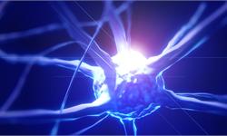 《神經免疫學雜志》:新化合物可保護神經纖維并增加髓磷脂,或用于治療神經系統疾病