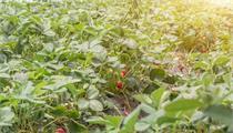 上海:政策福利!上海未来将打造现代农业先行片区