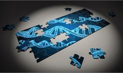 每300人就有1人NOTCH3基因突变,会导致65岁后中风风险升高