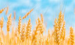 《聚合物》:用麦秆制成新型可生物降解<em>聚氨酯</em>泡沫
