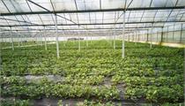 合肥市:关于全面提升都市现代农业发展水平的意见